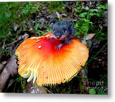 The Magic Mouse Metal Print by Sharon Costa