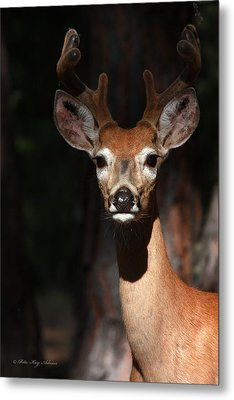 The Magnificent One  Metal Print by Rita Kay Adams
