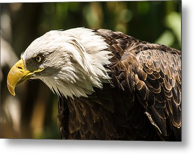 Metal Print featuring the photograph The Majestic American Bald Eagle by Yeates Photography