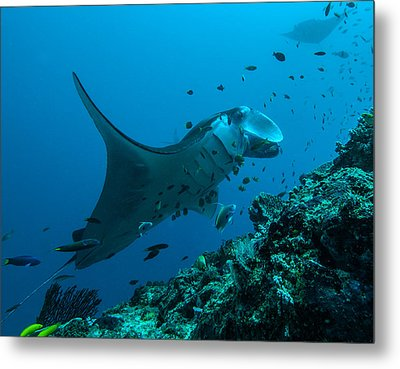 Metal Print featuring the photograph The Manta From Manta Alley by Terry Cosgrave
