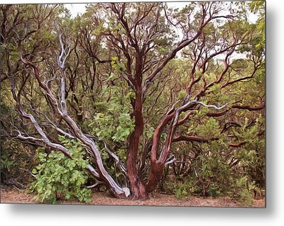 The Manzanita Tree Metal Print