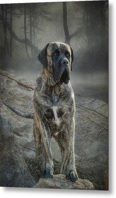 The Mastiff Metal Print
