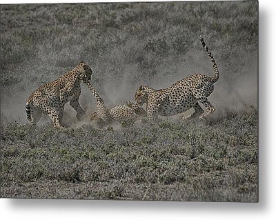 Metal Print featuring the photograph The Mating Game 2 by Gary Hall