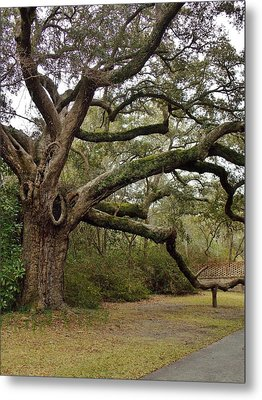 The Mighty Oak Metal Print by Stacy Sikes