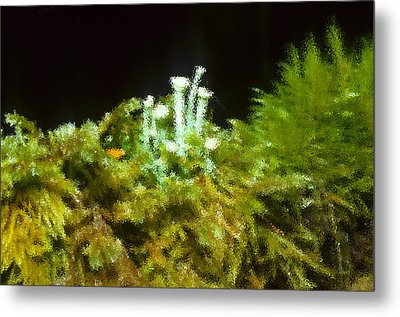 The Minature Green World Metal Print by Harold Greer