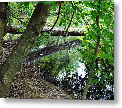 The Mirrored Tree Metal Print by Deborah Fay
