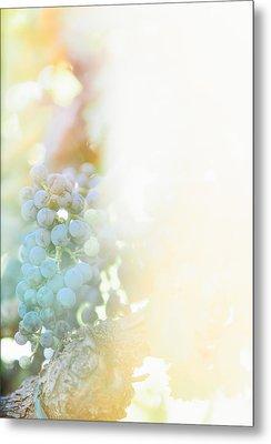 The Modern Grape 2 Metal Print