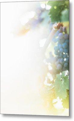 The Modern Grape 3 Metal Print by Clint Brewer