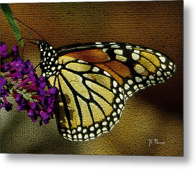 The Monarch / Butterflies Metal Print by James C Thomas