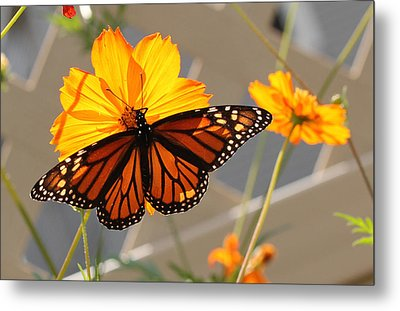 Metal Print featuring the photograph The Monarch by Cathy Donohoue