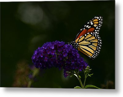 The Monarch Rules Metal Print