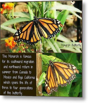Metal Print featuring the photograph The Monarch Story by Mindy Bench