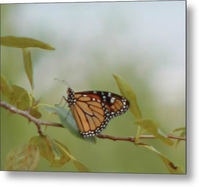 The Monark Metal Print by Rhonda Humphreys