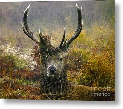 Stag Party The Series The Morning After Metal Print