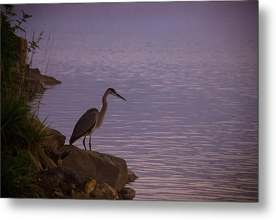 The Morning Hunt Metal Print