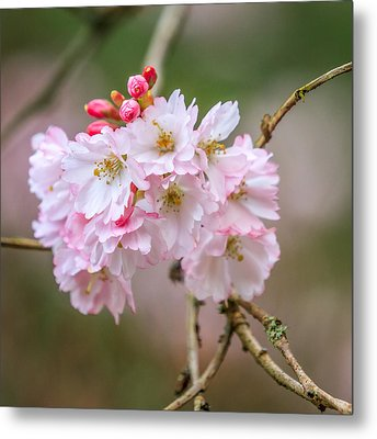 The Morning Of Spring Metal Print