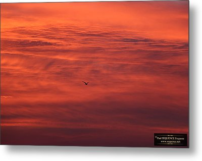 The Morning View 4 Metal Print by Paul SEQUENCE Ferguson             sequence dot net