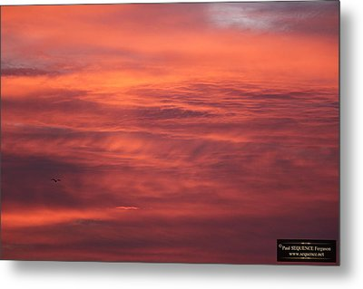 The Morning View 5 Metal Print by Paul SEQUENCE Ferguson             sequence dot net