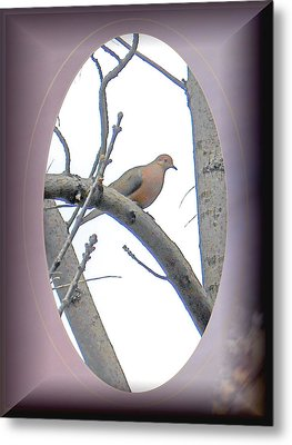 The Mourning Dove Metal Print by Patricia Keller