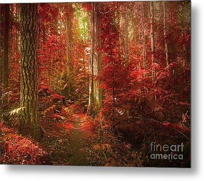 The Mystic Forest Metal Print by Tara Turner