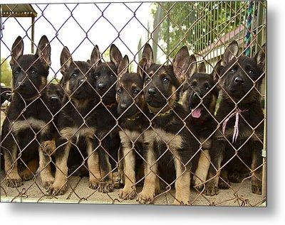 Metal Print featuring the photograph The N Litter by John Babis
