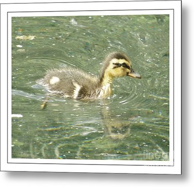 The New Addition Metal Print by Sara  Raber