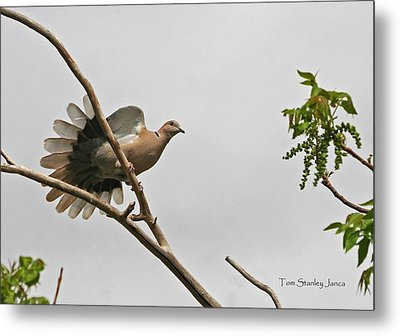 Metal Print featuring the photograph The New Dove In Town by Tom Janca