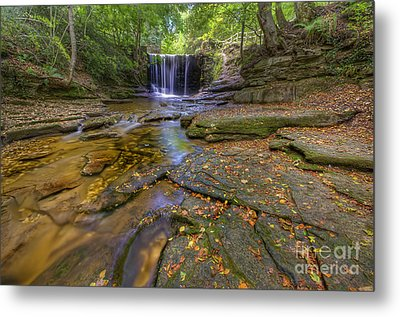 The New Fall  Metal Print by Darren Wilkes