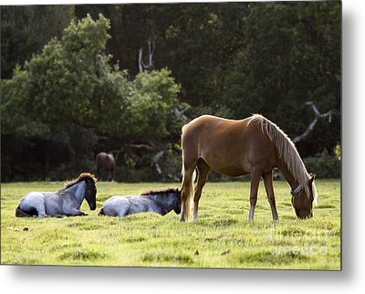 The New Forest  Metal Print by Angel  Tarantella