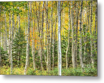 Metal Print featuring the photograph The North Woods by Wanda Krack
