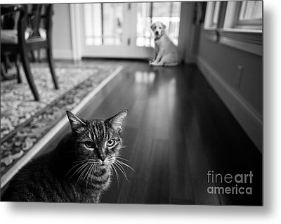 The Old Cat And The New Puppy Metal Print