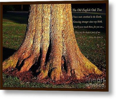 The Old English Oak Tree Metal Print
