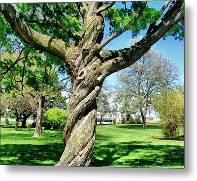 The Old Lady Of The Green Metal Print by Michelle Calkins