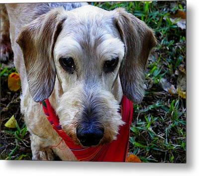 The Old Man Metal Print by Judy Wanamaker