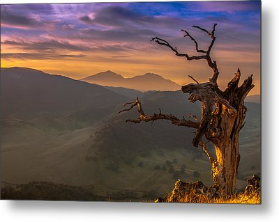 The Old Tree And Diablo Metal Print by Marc Crumpler