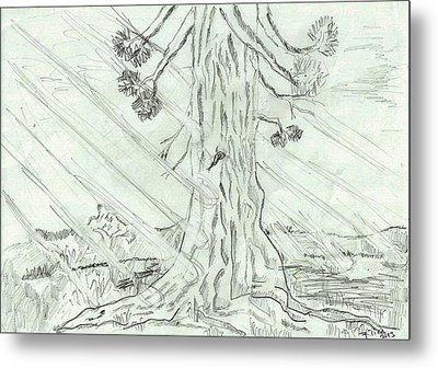 Metal Print featuring the drawing The Old Tree In Spring Light  - Sketch by Felicia Tica