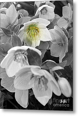 The One Metal Print by Geri Glavis
