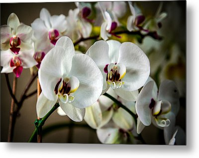 The Orchid Sisters And Backup Singers Metal Print by John Haldane