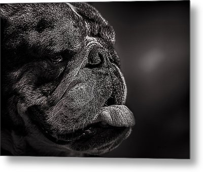 The Other Dog Next Door Metal Print by Bob Orsillo