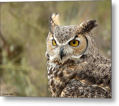 Metal Print featuring the photograph The Owl by Lucinda Walter