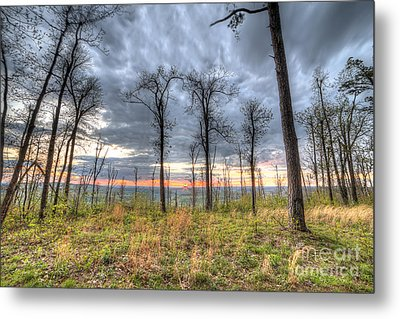 The Ozark National Forest Metal Print