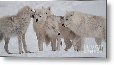 The Pack Metal Print