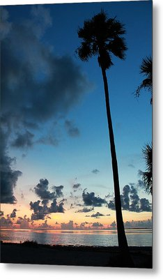 The Palm Majestic Sunset Beach Tarpon Springs Florida Metal Print by Robin Lewis