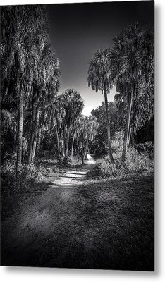 The Palm Trail B/w Metal Print by Marvin Spates