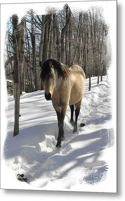 The Paso Fino Stallion Named Brio Metal Print by Patricia Keller