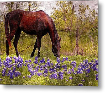 Metal Print featuring the photograph The Pasture by Kathy Churchman