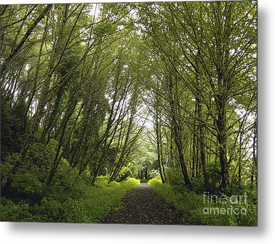Metal Print featuring the photograph The Path Ahead by Susan Parish
