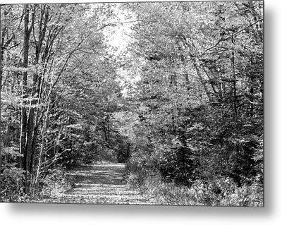 The Path Less Traveled Black And White Metal Print by Brett Pelletier