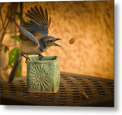 The Peanut Game Metal Print by Janis Knight
