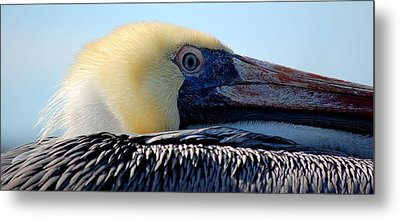 The Pelican Metal Print by AJ  Schibig
